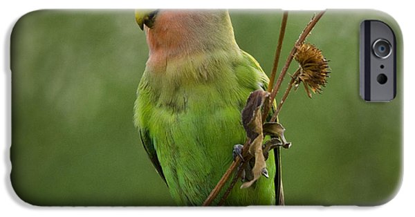 Lovely Little Lovebird  IPhone 6s Case by Saija  Lehtonen