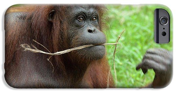 Malaysia, Borneo, Sabah, Kota Kinabalu IPhone 6s Case by Cindy Miller Hopkins