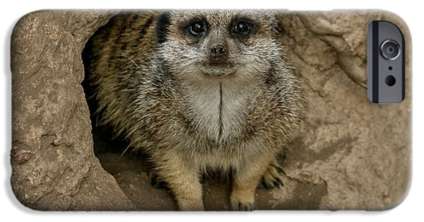 Meerkat IPhone 6s Case