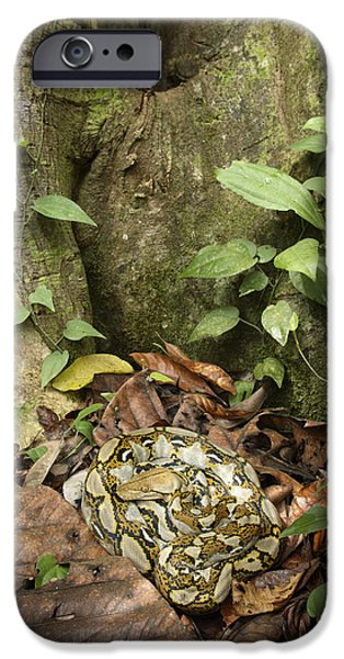 Reticulated Python IPhone 6s Case