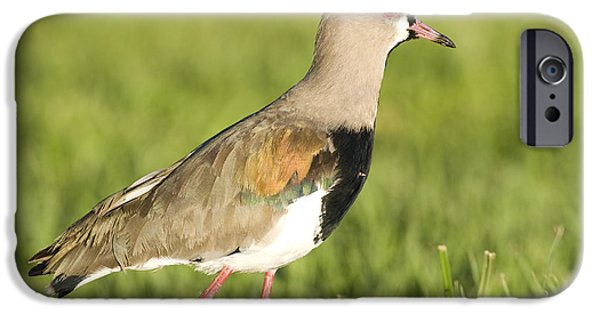 Lapwing iPhone 6s Case - Southern Lapwing by William H. Mullins