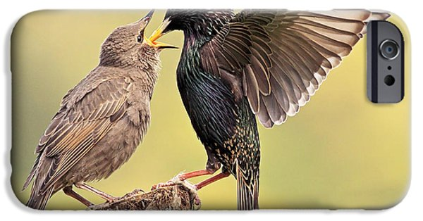 Starlings IPhone 6s Case by Grant Glendinning