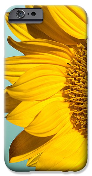 Sunflower iPhone 6s Case - Sunflower by Mark Ashkenazi