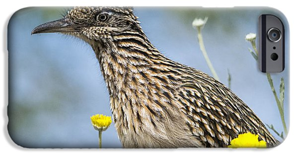 The Greater Roadrunner  IPhone 6s Case