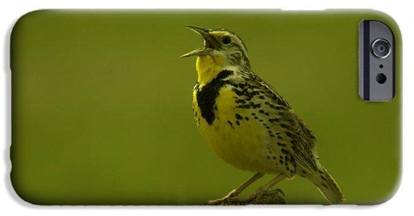 The Meadowlark Sings IPhone 6s Case by Jeff Swan