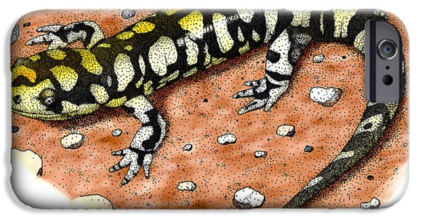 Tiger Salamander IPhone 6s Case by Roger Hall