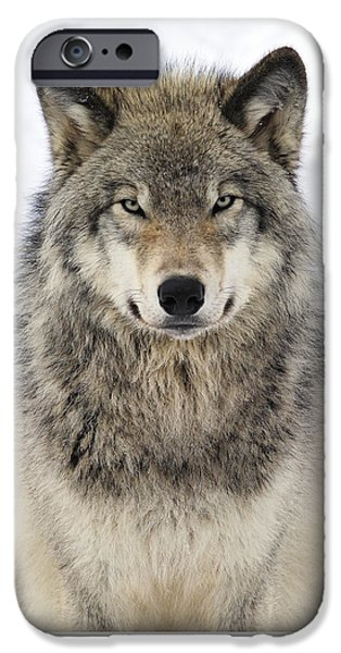 Wolf iPhone 6s Case - Timber Wolf Portrait by Tony Beck