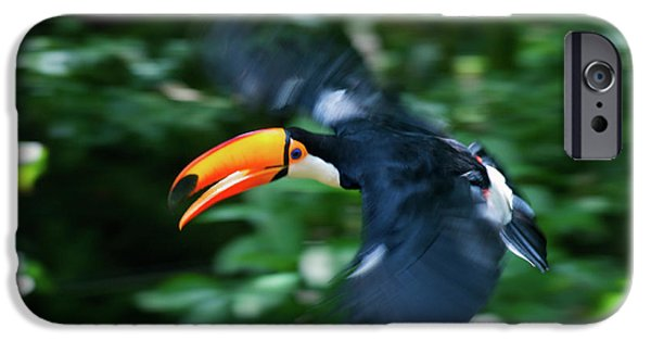 Toco Toucan (ramphastos Toco IPhone 6s Case by Andres Morya Hinojosa