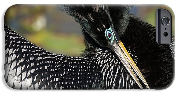 Anhinga iPhone 6s Case - Usa, Florida, Everglades National Park by Jaynes Gallery