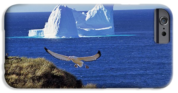 Wandering Albatross (diomendea Exulans IPhone 6s Case