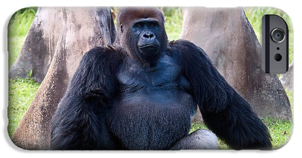 Western Lowland Gorilla IPhone 6s Case by Mark Newman