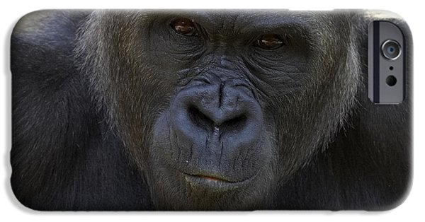 Western Lowland Gorilla Portrait IPhone 6s Case by San Diego Zoo