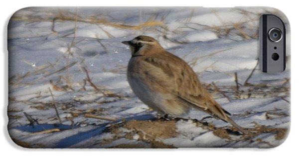 Meadowlark iPhone 6s Case - Winter Bird by Jeff Swan