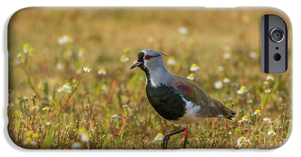 Lapwing iPhone 6s Case - South America, Chile, Patagonia, Torres by Jaynes Gallery