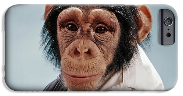 1970s Close-up Face Chimpanzee Looking IPhone 6s Case