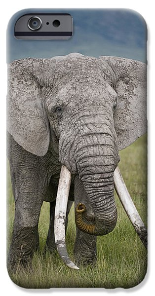 African Elephant Loxodonta Africana IPhone 6s Case by Panoramic Images