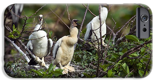 Baby Anhinga IPhone 6s Case by Mark Newman