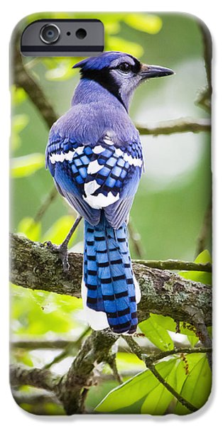 Bluejay IPhone 6s Case