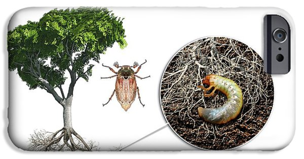 Cockchafer And Beech Tree IPhone 6s Case