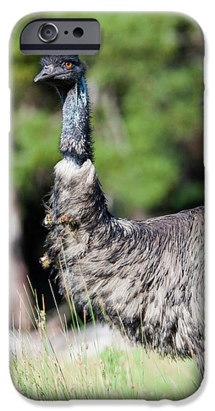 Emu (dromaius Novaehollandiae IPhone 6s Case