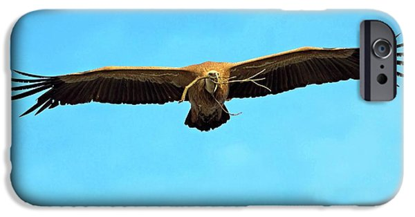 Griffon Vulture In Flight IPhone 6s Case