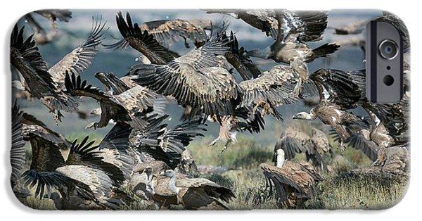 Griffon Vultures IPhone 6s Case