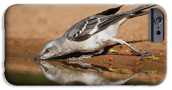 Mockingbird iPhone 6s Case - Northern Mockingbird (mimus Polyglottos by Larry Ditto