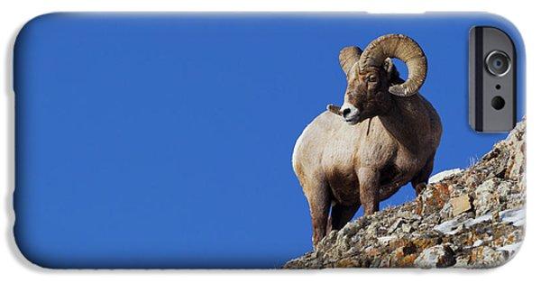 Rocky Mountain Bighorn Sheep iPhone 6s Case - Rocky Mountain Bighorn Sheep by Ken Archer