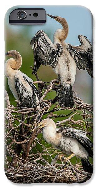 Anhinga iPhone 6s Case - Usa, Florida, Green Cay, Wakodahatchee by Jaynes Gallery