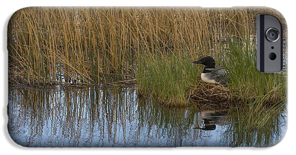 Common Loon Gavia Immer, Canada IPhone 6s Case by John Shaw