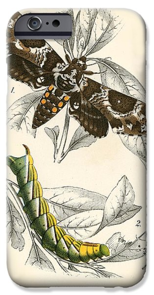 Butterflies IPhone 6s Case by English School