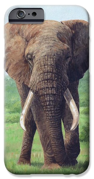 African Elephant IPhone 6s Case by David Stribbling