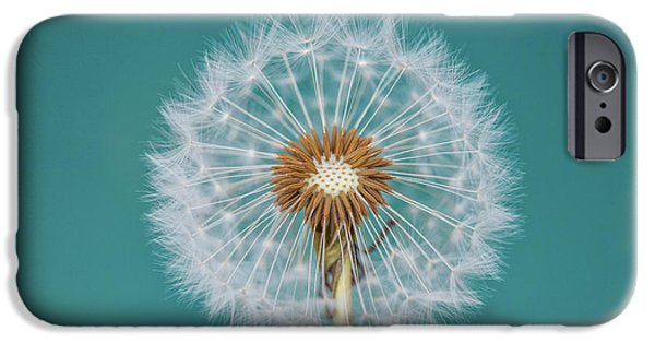 Teal iPhone 6s Case - Dandelion by Bess Hamiti