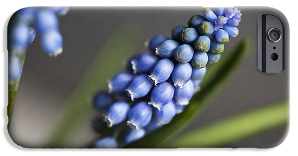 Grape Hyacinth IPhone 6s Case by Nailia Schwarz