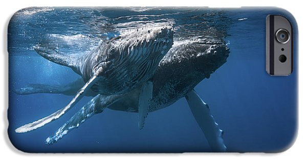 Swimming iPhone 6s Case - Humpback Whale by Barathieu Gabriel