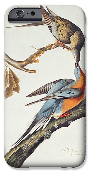 Pigeon iPhone 6s Case - Passenger Pigeon by John James Audubon