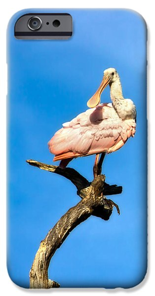 Roseate Spoonbill IPhone 6s Case by Mark Andrew Thomas