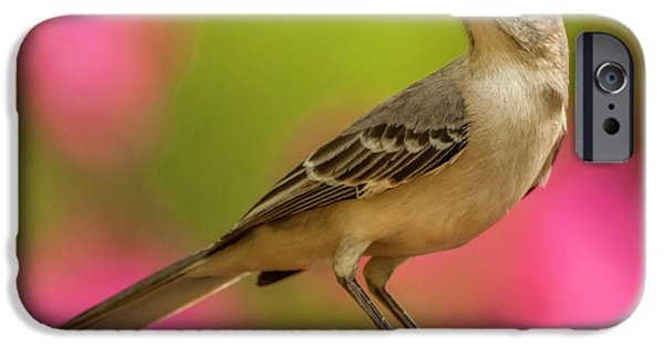 Mockingbird iPhone 6s Case - Usa, North Carolina, Guilford County by Jaynes Gallery