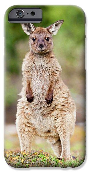 Western Grey Kangaroo (macropus IPhone 6s Case