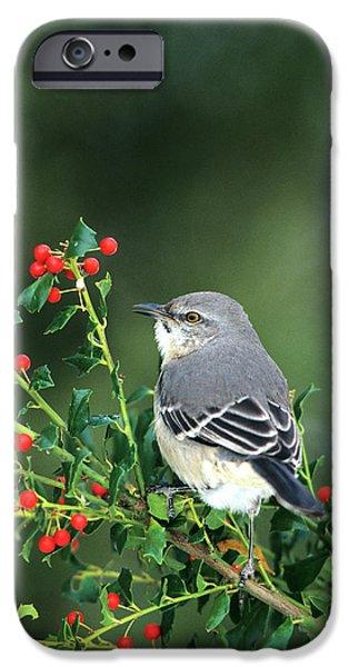 Mockingbird iPhone 6s Case - Northern Mockingbird (mimus Polyglottos by Richard and Susan Day