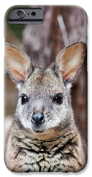 Tammar Wallaby (macropus Eugenii IPhone 6s Case