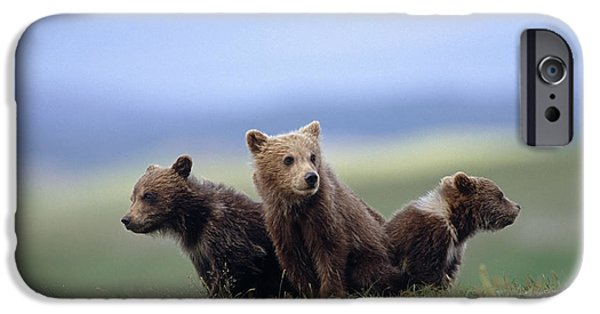 4 Young Brown Bear Cubs Huddled IPhone 6s Case by Eberhard Brunner