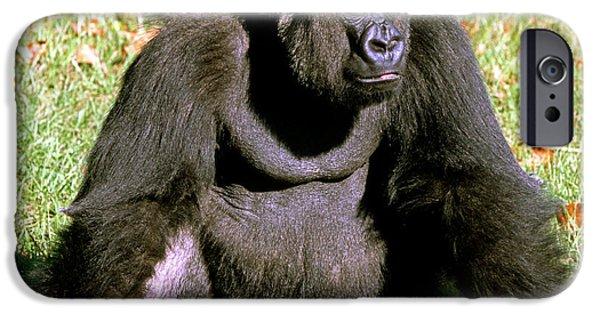Adult Male Western Lowland Gorilla IPhone 6s Case