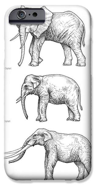 Elephant Evolution, Artwork IPhone 6s Case by Gary Hincks