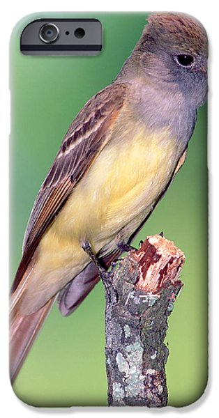 Great Crested Flycatcher IPhone 6s Case