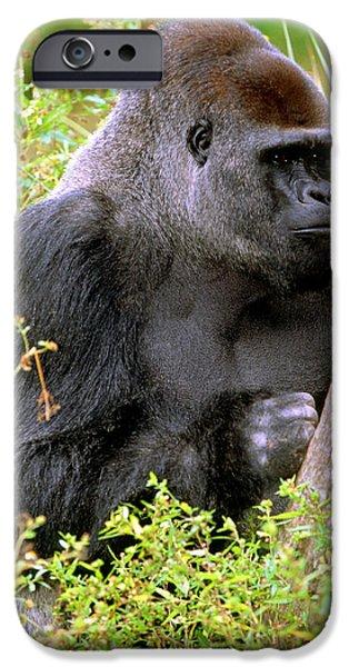 Western Lowland Gorilla IPhone 6s Case