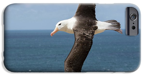 Black-browed Albatross (thalassarche IPhone 6s Case by Martin Zwick