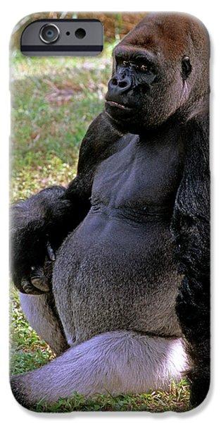 Silverback Western Lowland Gorilla IPhone 6s Case