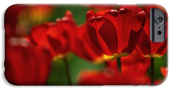 Red And Yellow Tulips IPhone 6s Case
