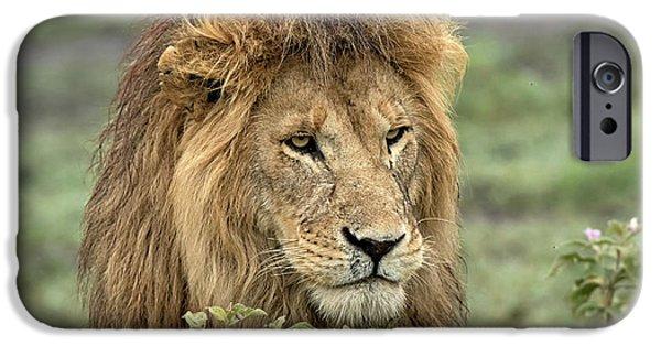 Africa, Tanzania, Serengeti IPhone 6s Case